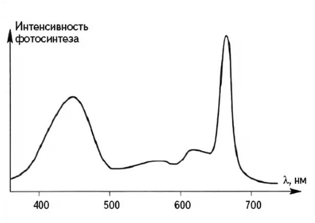 Как зависит интенсивность фотосинтеза от освещения