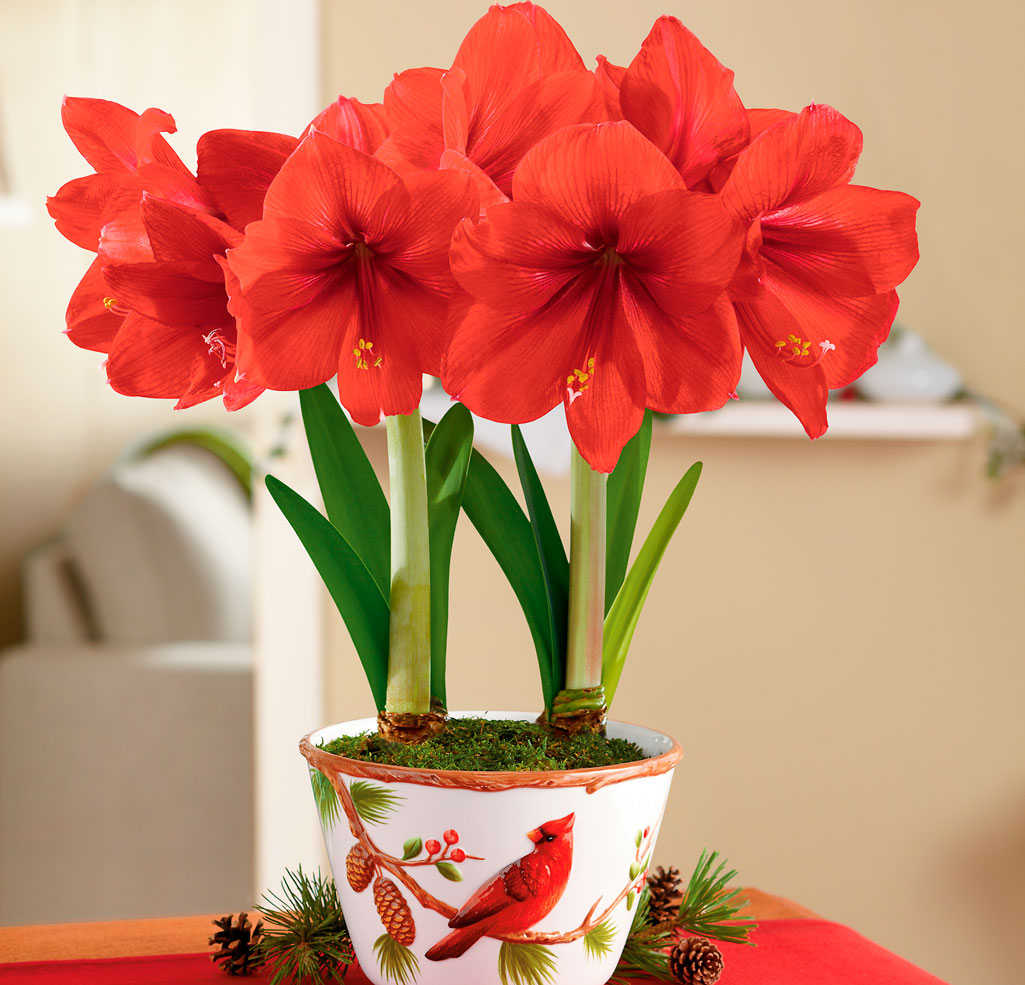 Красивые домашние растения с названиями и фото