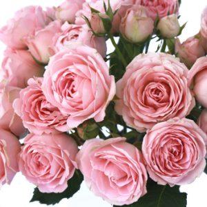Как называется этот сорт розы-спрей? / Поваренок