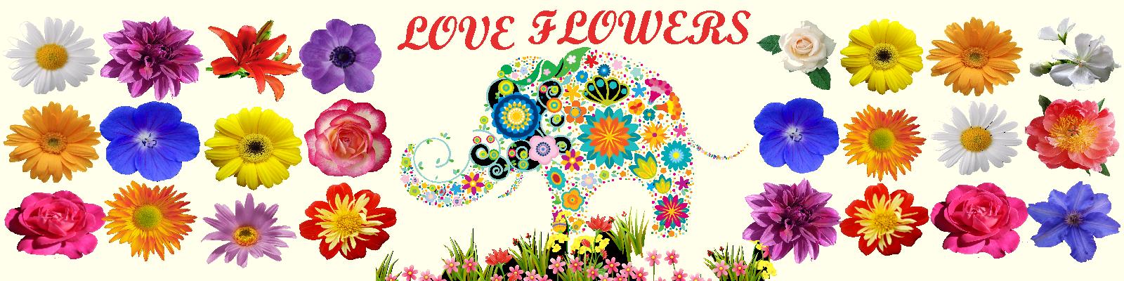 Цветы: уход в домашних условиях за счастьем