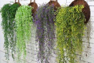 Вьющиеся комнатные растения с названиями